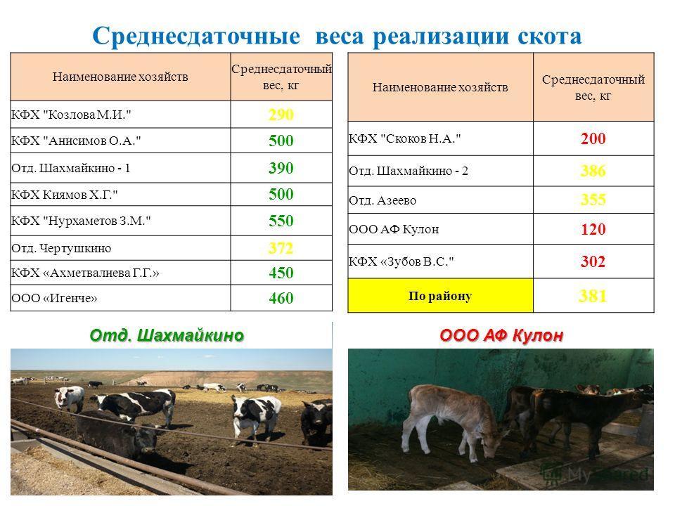 Среднесдаточные веса реализации скота Наименование хозяйств Среднесдаточный вес, кг КФХ