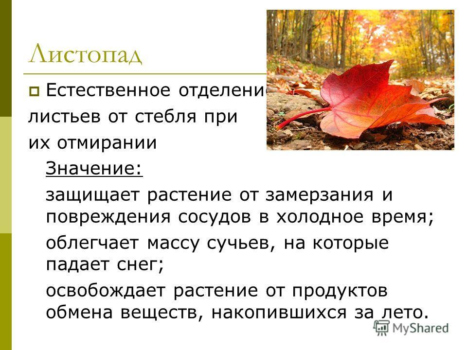 Листопад Естественное отделение листьев от стебля при их отмирании Значение: защищает растение от замерзания и повреждения сосудов в холодное время; облегчает массу сучьев, на которые падает снег; освобождает растение от продуктов обмена веществ, нак