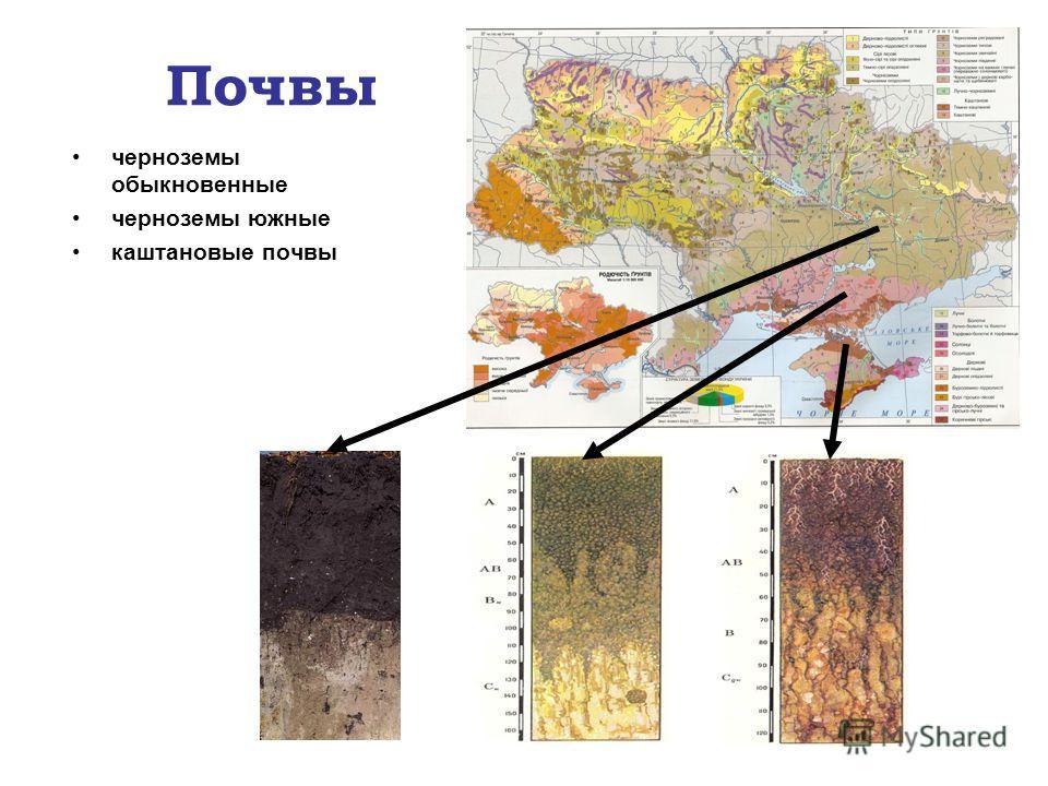 Почвы черноземы обыкновенные черноземы южные каштановые почвы