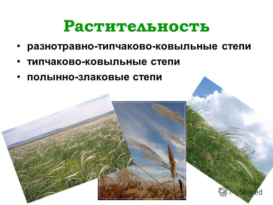 Растительность разнотравно-типчаково-ковыльные степи типчаково-ковыльные степи полынно-злаковые степи