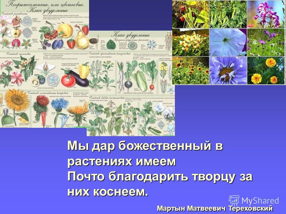 Мы дар божественный в растениях имеем Почто благодарить творцу за них коснеем. Мартын Матвеевич Тереховский