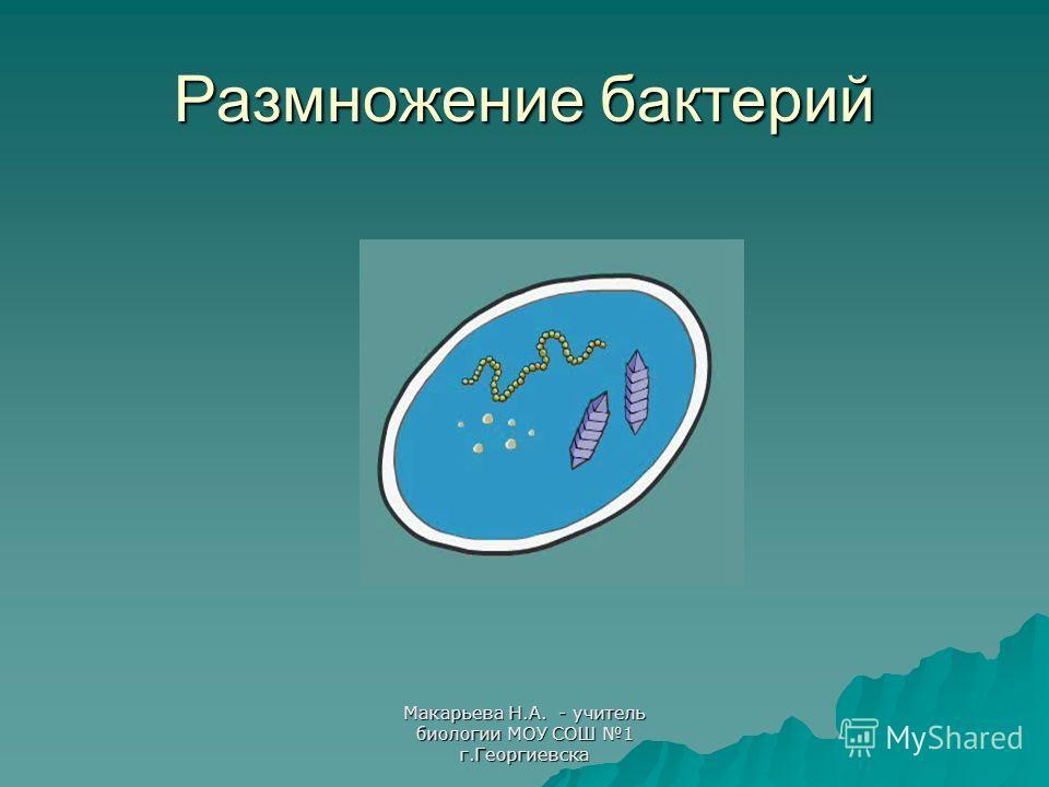 Макарьева Н.А. - учитель биологии МОУ СОШ 1 г.Георгиевска Размножение бактерий