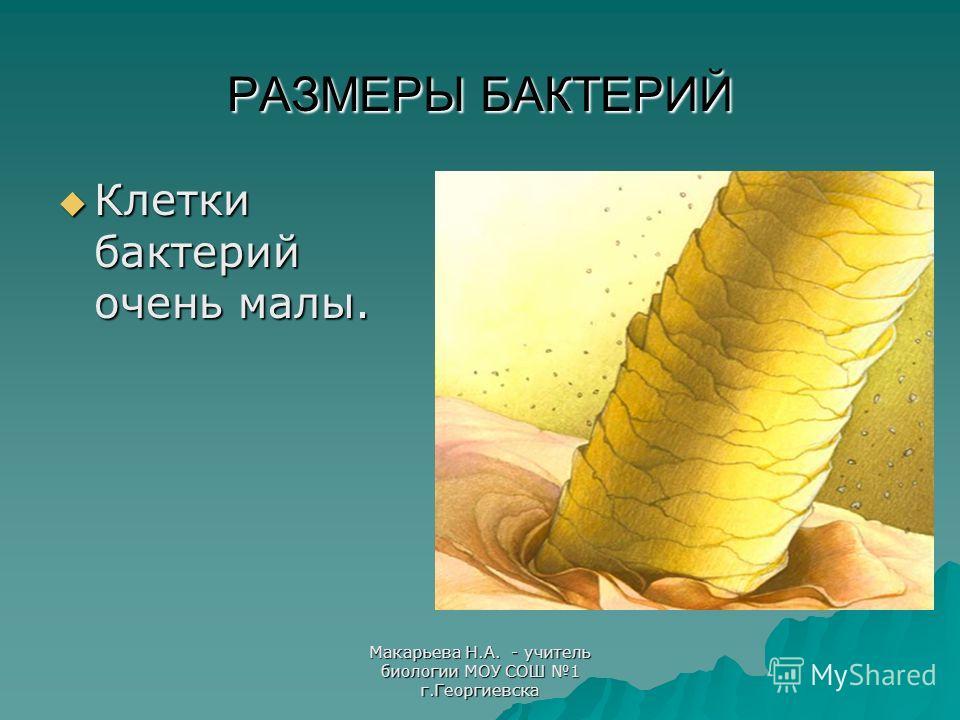 Макарьева Н.А. - учитель биологии МОУ СОШ 1 г.Георгиевска РАЗМЕРЫ БАКТЕРИЙ Клетки бактерий очень малы.