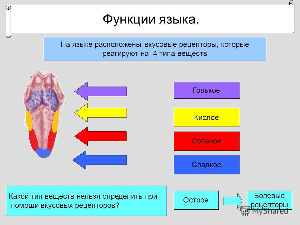 Функции языка. На языке расположены вкусовые рецепторы, которые реагируют на 4 типа веществ Горькое Кислое Соленое Сладкое Какой тип веществ нельзя определить при помощи вкусовых рецепторов? Острое Болевые рецепторы