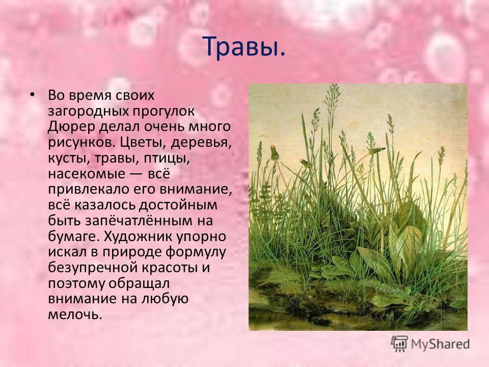 Травы. Во время своих загородных прогулок Дюрер делал очень много рисунков. Цветы, деревья, кусты, травы, птицы, насекомые всё привлекало его внимание, всё казалось достойным быть запёчатлённым на бумаге. Художник упорно искал в природе формулу безуп