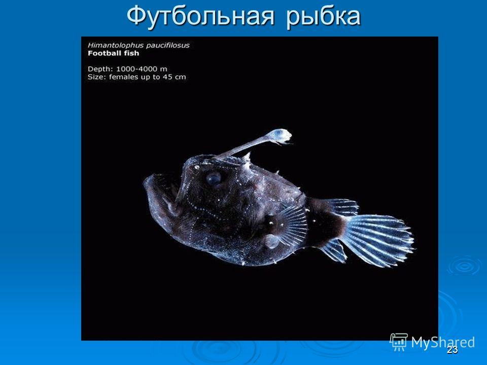 Футбольная рыбка 23