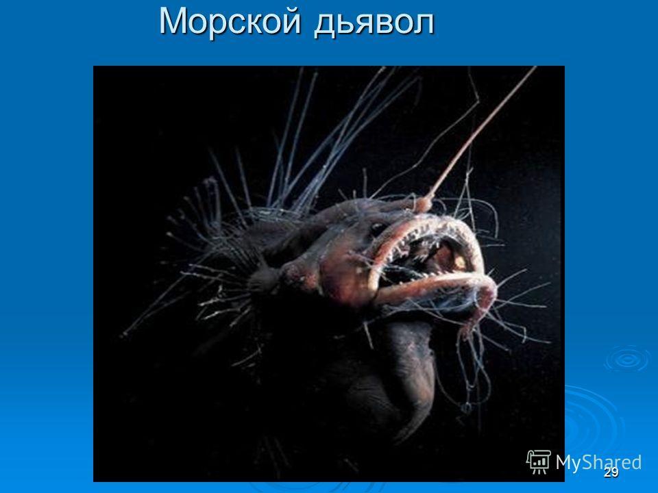 Морской дьявол 29