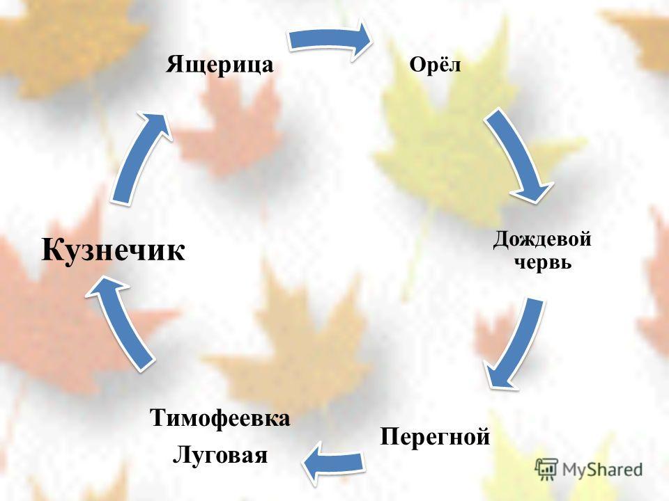 Орёл Дождевой червь Перегной Тимофеевка Луговая Кузнечик Ящерица