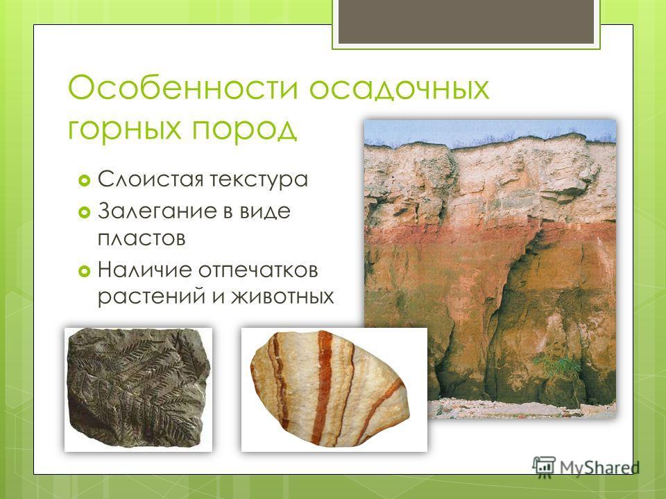 Особенности осадочных горных пород Слоистая текстура Залегание в виде пластов Наличие отпечатков растений и животных