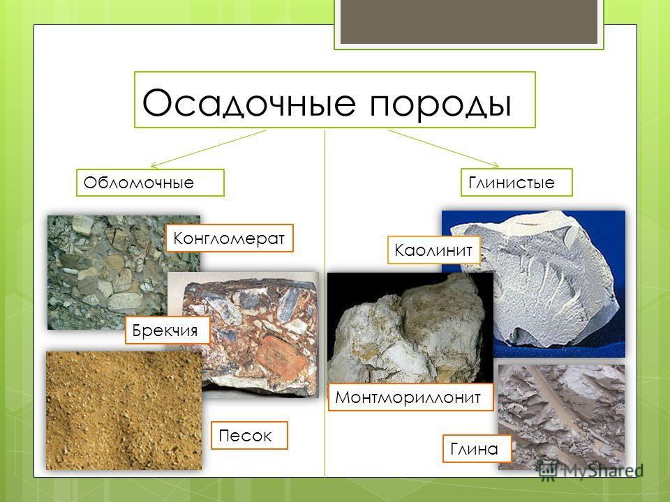 Осадочные породы Обломочные Глинистые Конгломерат Брекчия Песок Каолинит Монтмориллонит Глина