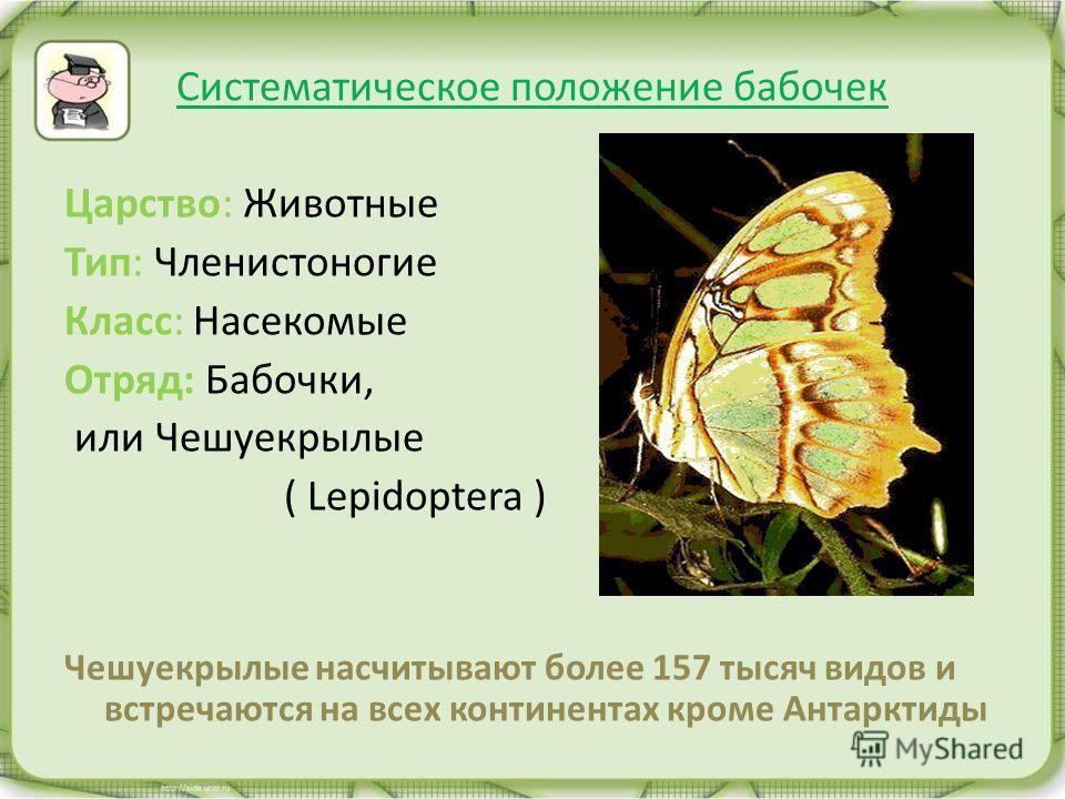 Систематическое положение бабочек Царство: Животные Тип: Членистоногие Класс: Насекомые Отряд: Бабочки, или Чешуекрылые ( Lepidoptera ) Чешуекрылые насчитывают более 157 тысяч видов и встречаются на всех континентах кроме Антарктиды