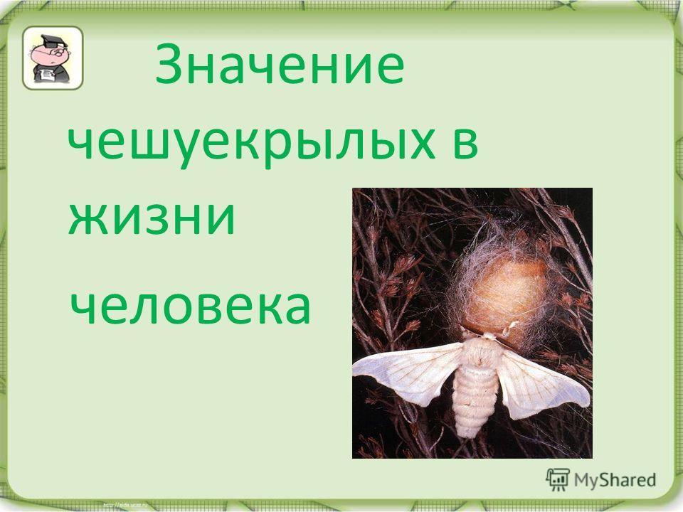 Значение чешуекрылых в жизни человека