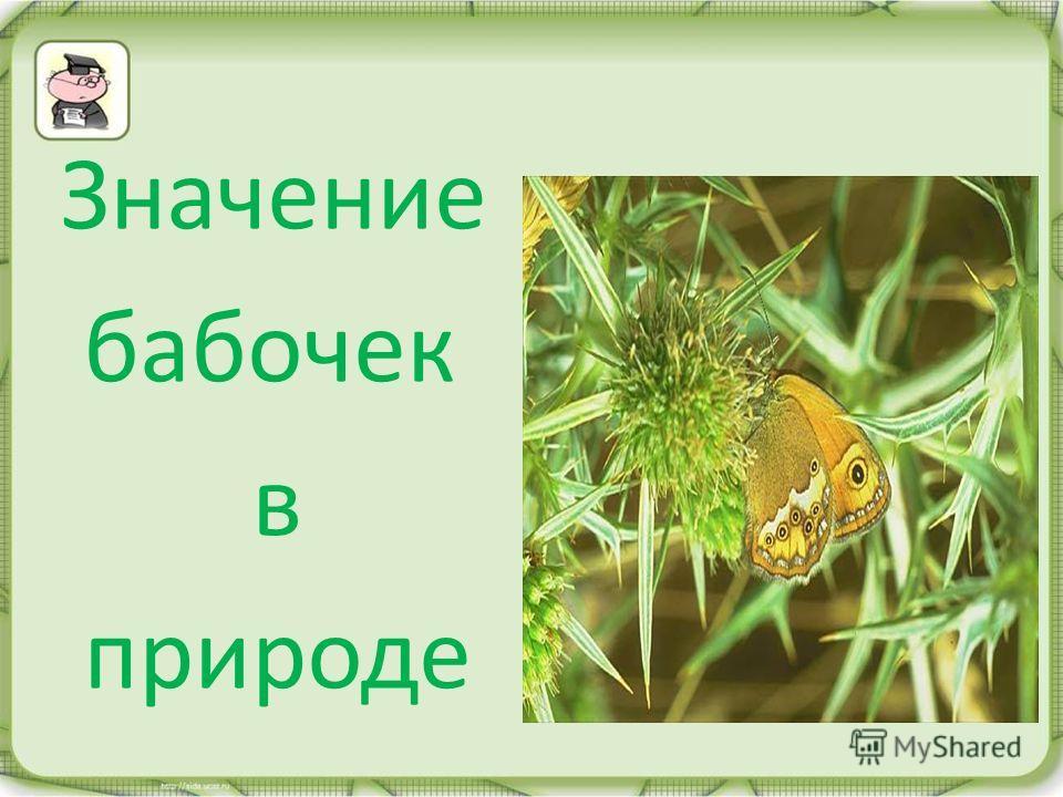 Значение бабочек в природе