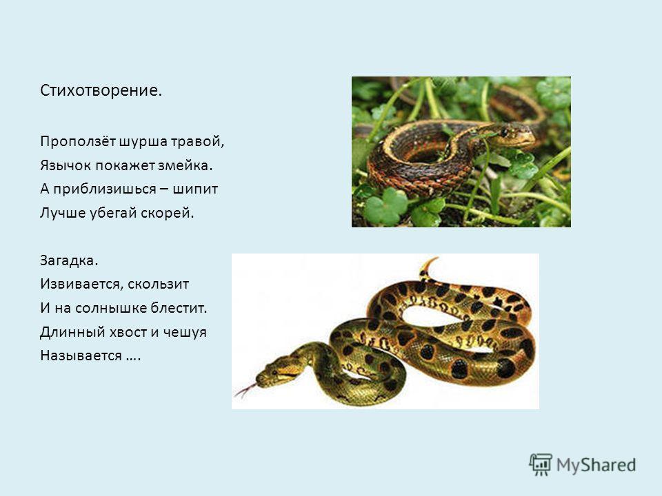 Стихотворение. Проползёт шурша травой, Язычок покажет змейка. А приблизишься – шипит Лучше убегай скорей. Загадка. Извивается, скользит И на солнышке блестит. Длинный хвост и чешуя Называется ….