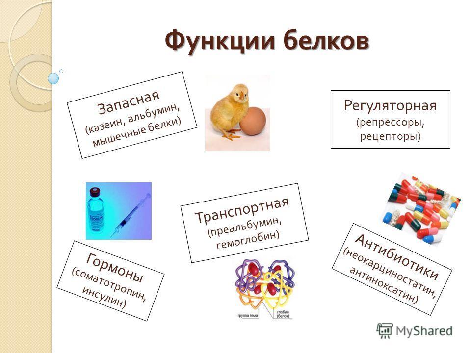 Функции белков Запасная ( казеин, альбумин, мышечные белки ) Транспортная ( преальбумин, гемоглобин ) Регуляторная ( репрессоры, рецепторы ) Гормоны ( соматотропин, инсулин ) Антибиотики ( неокарциностатин, антиноксатин )