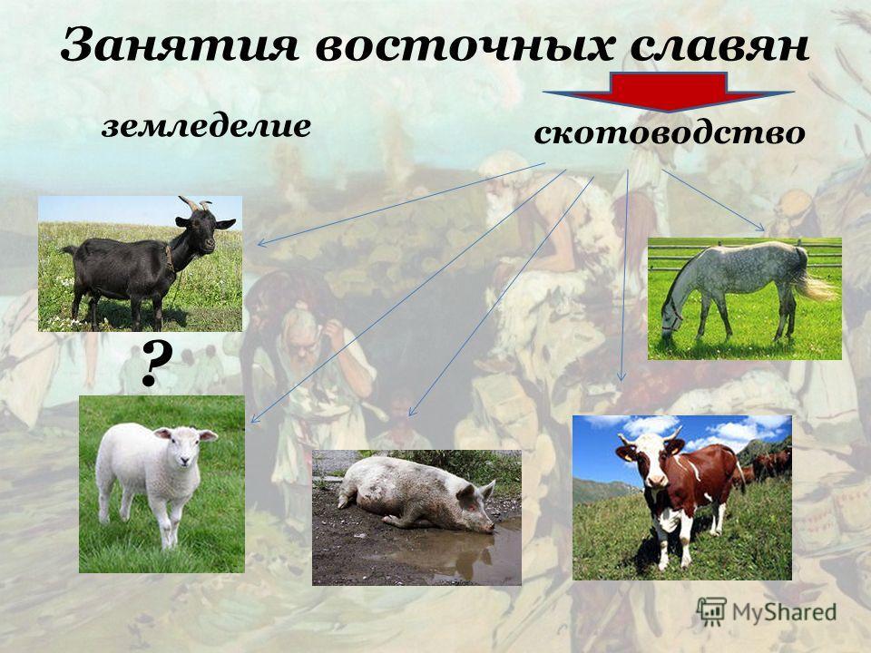 Занятия восточных славян земледелие скотоводство ?