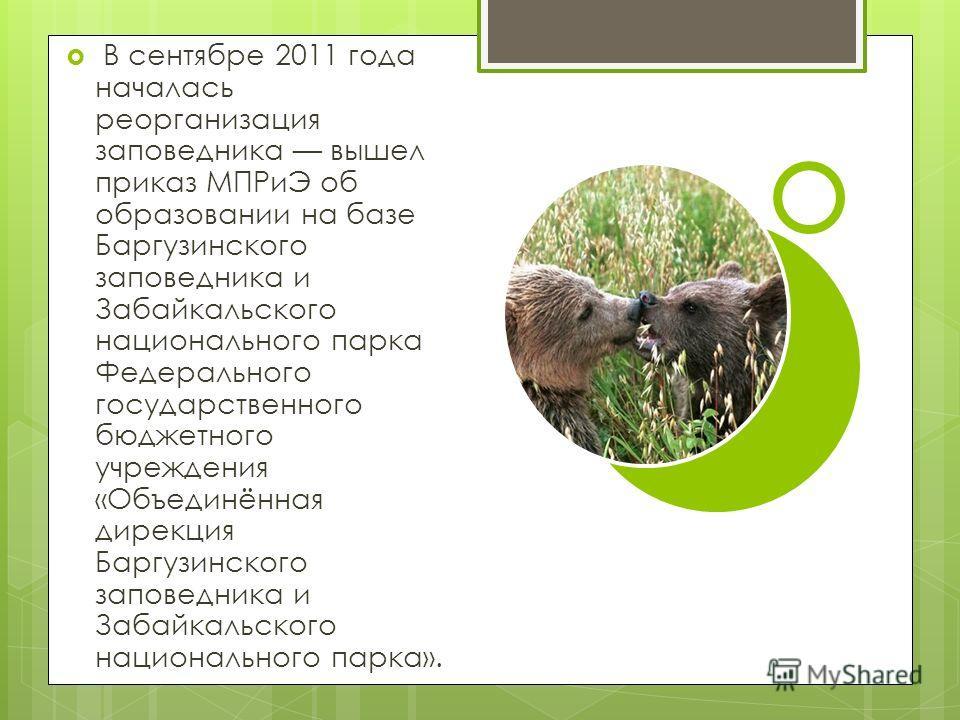 В сентябре 2011 года началась реорганизация заповедника вышел приказ МПРиЭ об образовании на базе Баргузинского заповедника и Забайкальского национального парка Федерального государственного бюджетного учреждения «Объединённая дирекция Баргузинского
