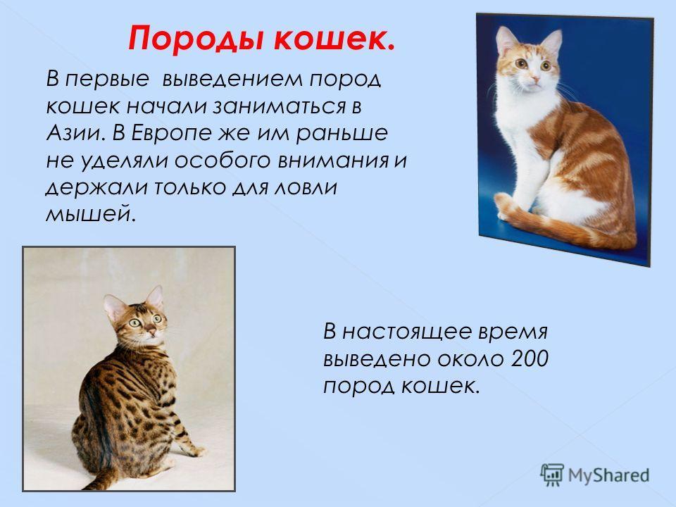 В первые выведением пород кошек начали заниматься в Азии. В Европе же им раньше не уделяли особого внимания и держали только для ловли мышей. В настоящее время выведено около 200 пород кошек. Породы кошек.