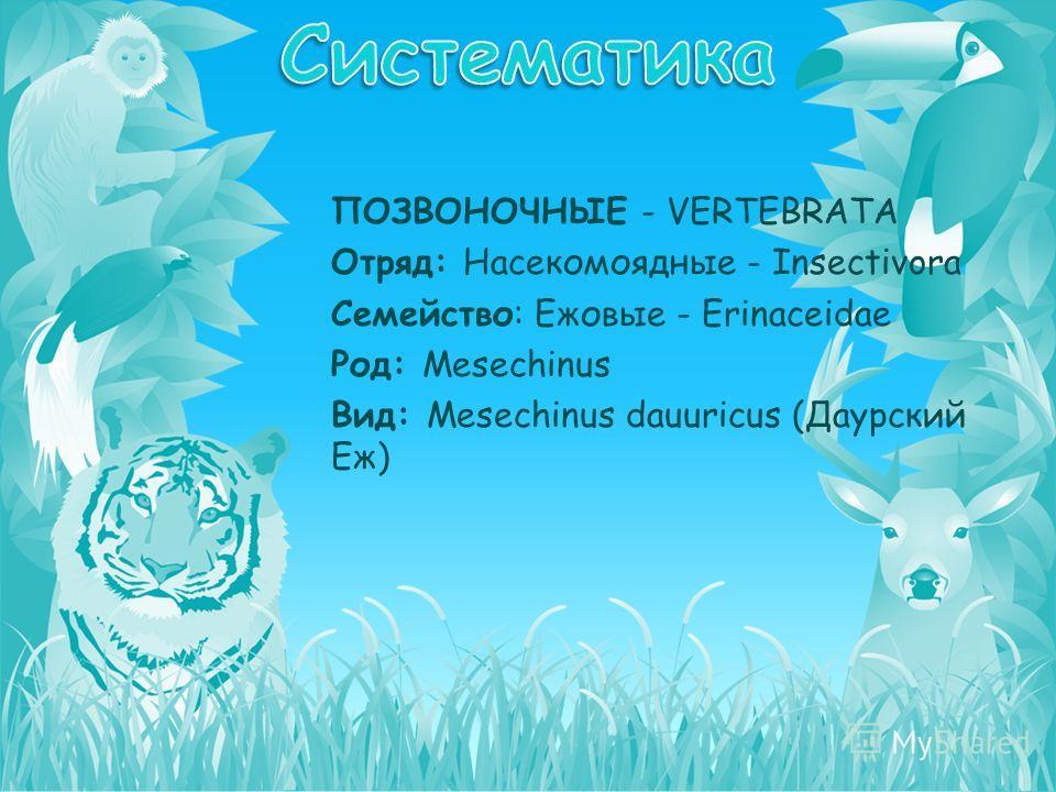 ПОЗВОНОЧНЫЕ - VERTEBRATA Отряд: Насекомоядные - Insectivora Семейство: Ежовые - Erinaceidae Род: Mesechinus Вид: Mesechinus dauuricus (Даурский Еж)