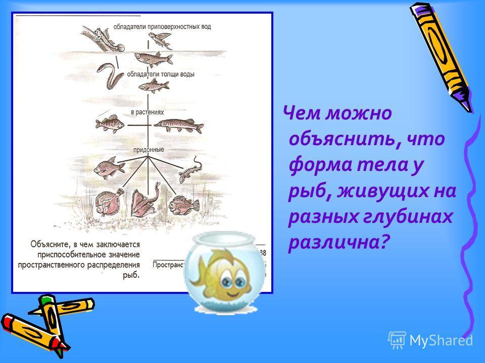 Чем можно объяснить, что форма тела у рыб, живущих на разных глубинах различна?