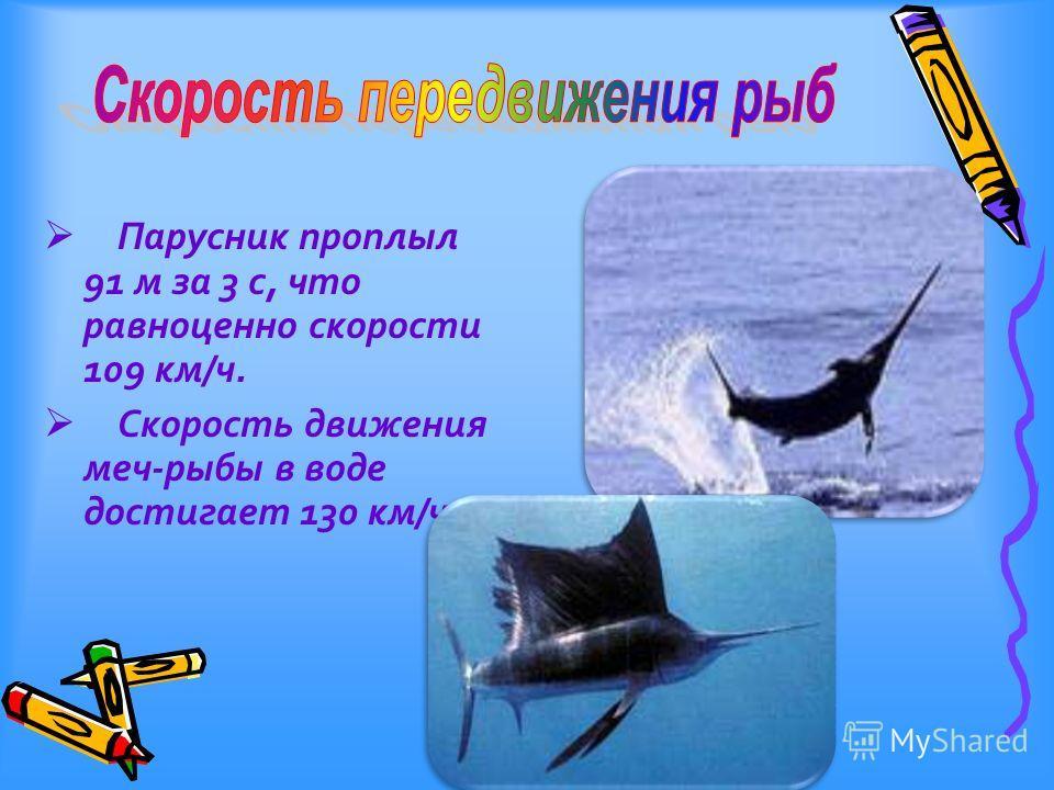 Парусник проплыл 91 м за 3 с, что равноценно скорости 109 км/ч. Скорость движения меч-рыбы в воде достигает 130 км/ч.