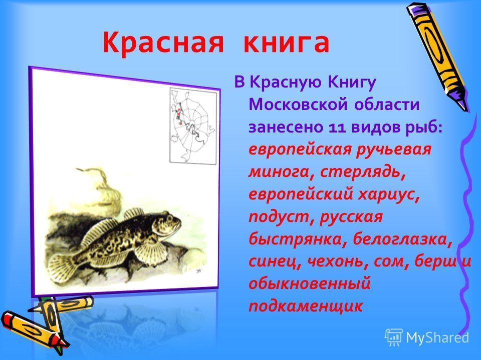 Красная книга В Красную Книгу Московской области занесено 11 видов рыб: европейская ручьевая минога, стерлядь, европейский хариус, подуст, русская быстрянка, белоглазка, синец, чехонь, сом, берш и обыкновенный подкаменщик