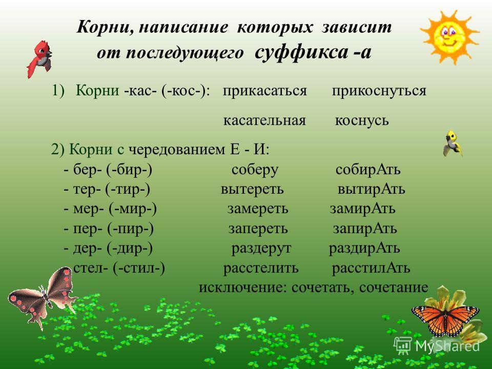 Корни, написание которых зависит от последующего суффикса -а 1)Корни -кас- (-кос-): прикасаться прикоснуться касательная коснусь 2) Корни с чередованием Е - И: - бер- (-бир-) соберу собирАть - тер- (-тир-) вытереть вытирАть - мер- (-мир-) замереть за