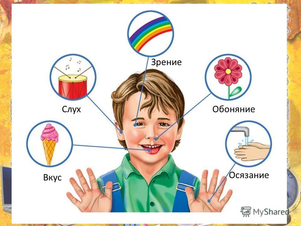 Органы чувств Обоняние Осязание Слух Зрение Вкус