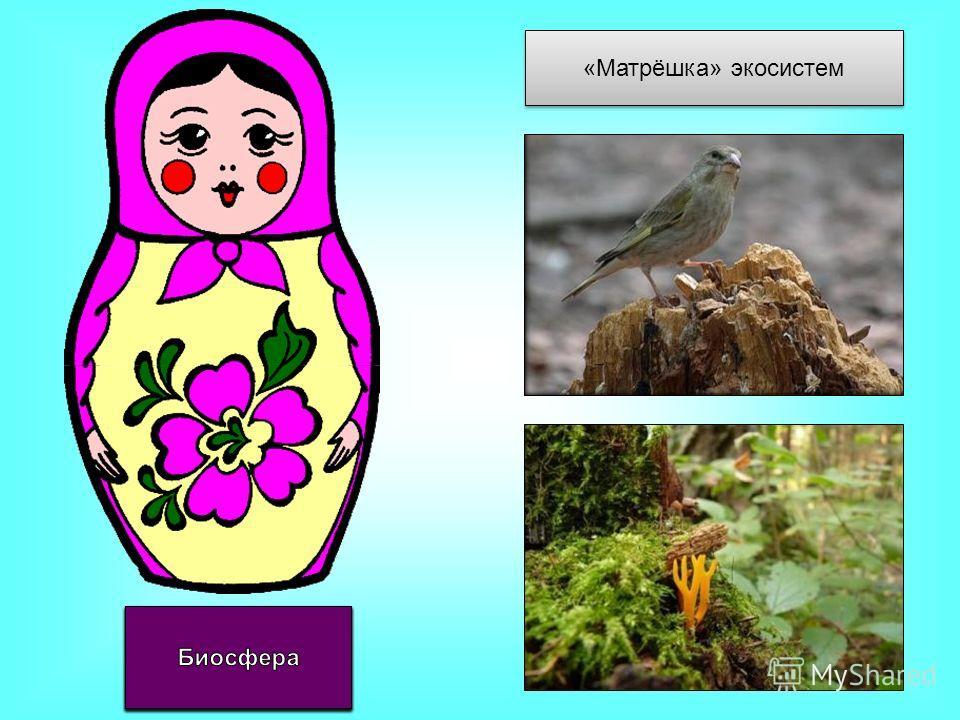 «Матрёшка» экосистем