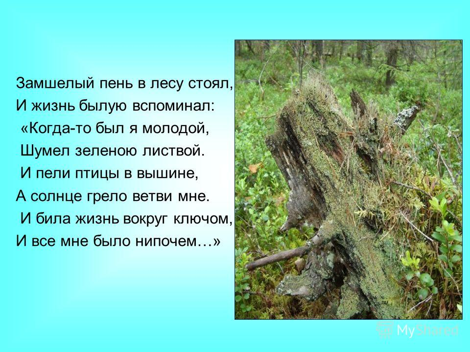 Замшелый пень в лесу стоял, И жизнь былую вспоминал: «Когда-то был я молодой, Шумел зеленою листвой. И пели птицы в вышине, А солнце грело ветви мне. И била жизнь вокруг ключом, И все мне было нипочем…»