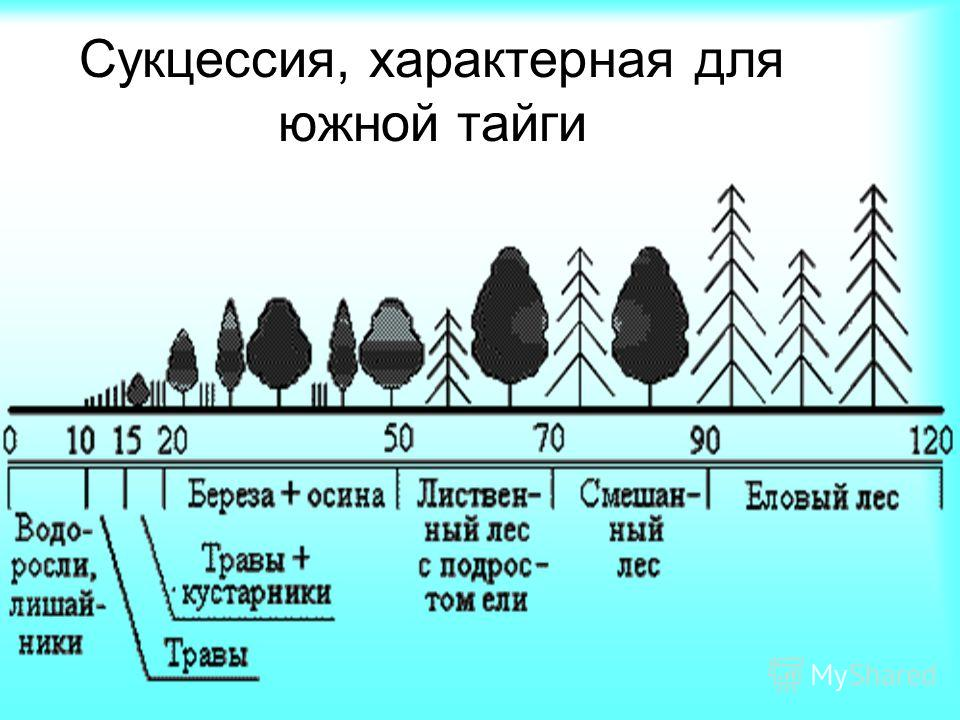 Сукцессия, характерная для южной тайги