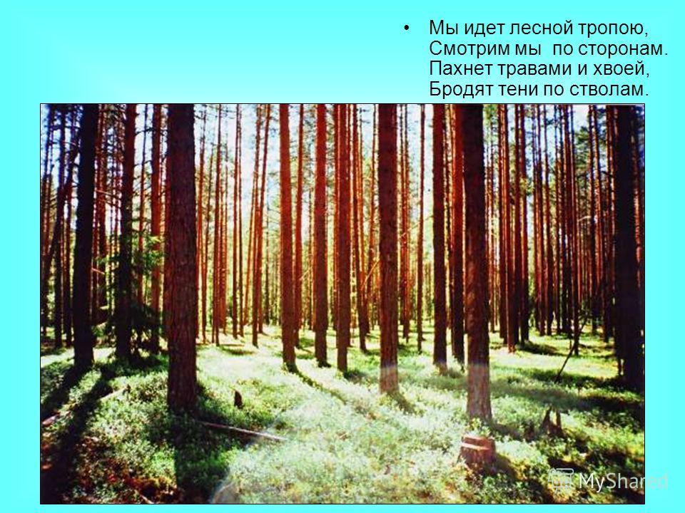 Мы идет лесной тропою, Смотрим мы по сторонам. Пахнет травами и хвоей, Бродят тени по стволам.