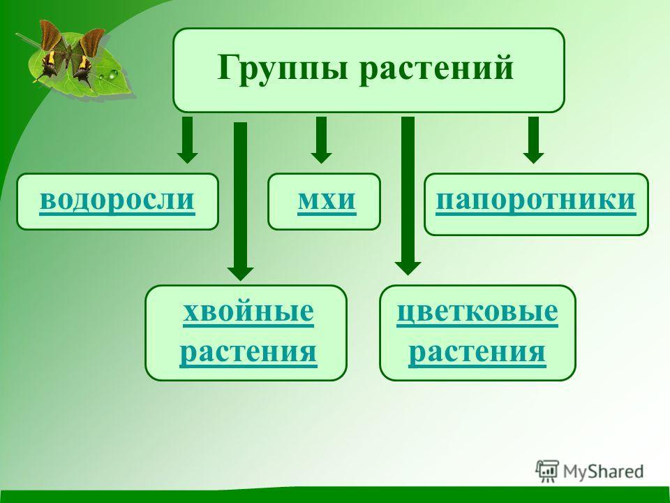 Группы растений дикорастущиекультурные