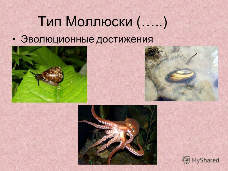 Тип Моллюски (…..) Эволюционные достижения