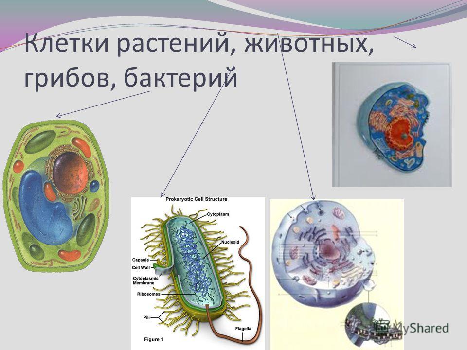 Клетки растений, животных, грибов, бактерий