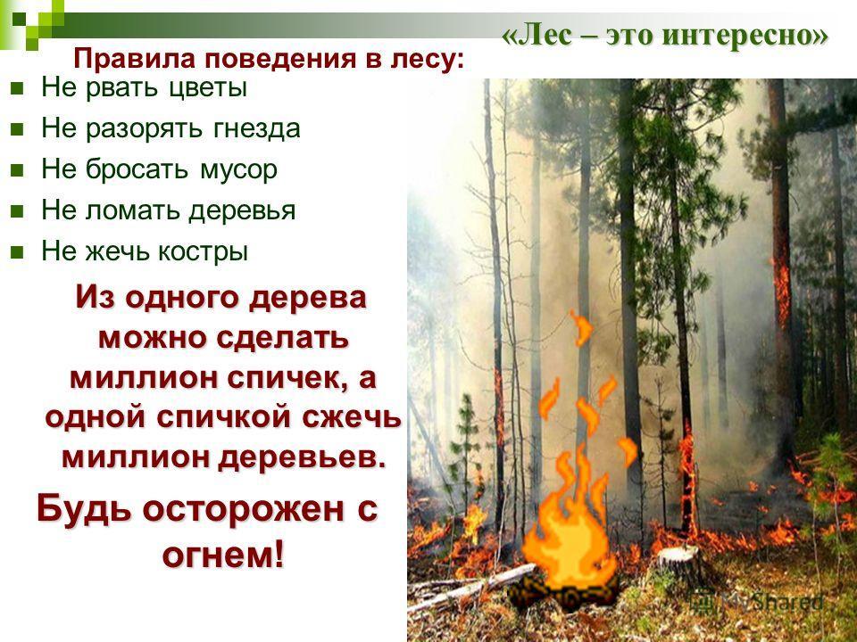 «Лес – это интересно» Не рвать цветы Не разорять гнезда Не бросать мусор Не ломать деревья Не жечь костры Из одного дерева можно сделать миллион спичек, а одной спичкой сжечь миллион деревьев. Будь осторожен с огнем! Правила поведения в лесу: