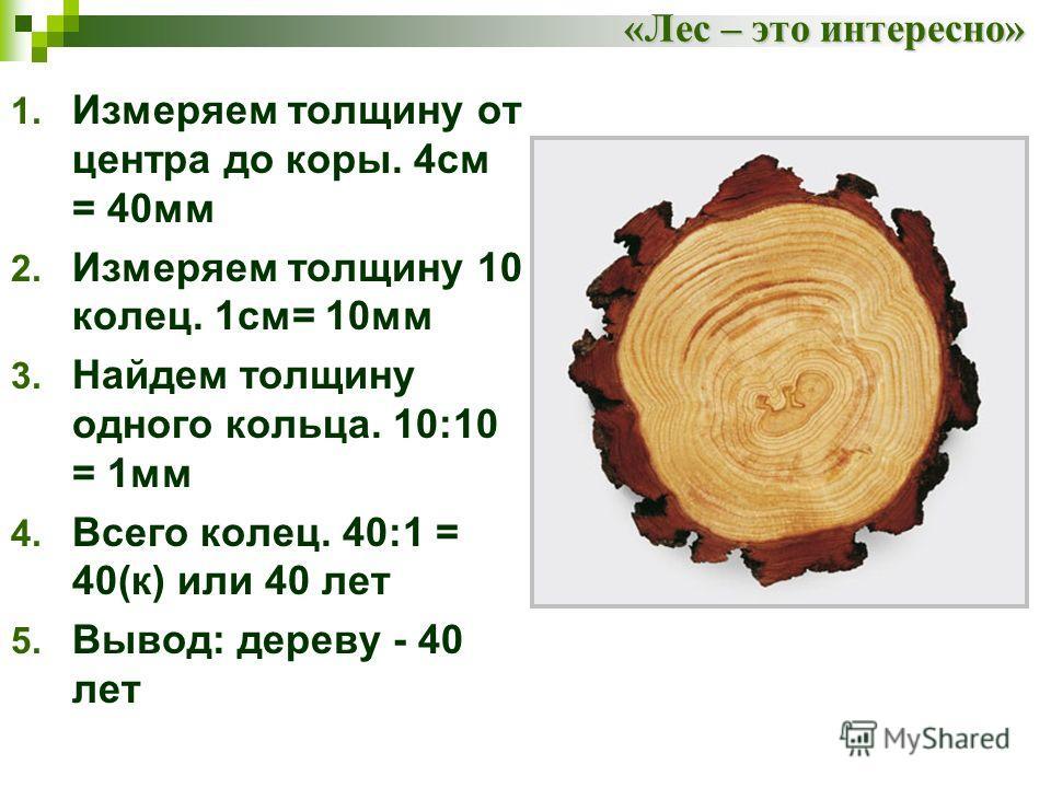 «Лес – это интересно» 1. Измеряем толщину от центра до коры. 4см = 40мм 2. Измеряем толщину 10 колец. 1см= 10мм 3. Найдем толщину одного кольца. 10:10 = 1мм 4. Всего колец. 40:1 = 40(к) или 40 лет 5. Вывод: дереву - 40 лет