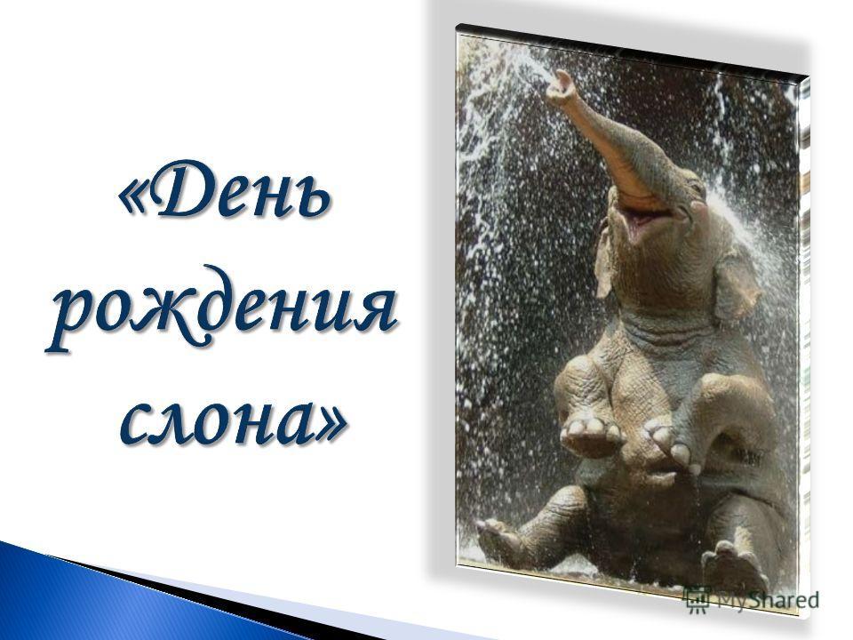 «День рождения слона»