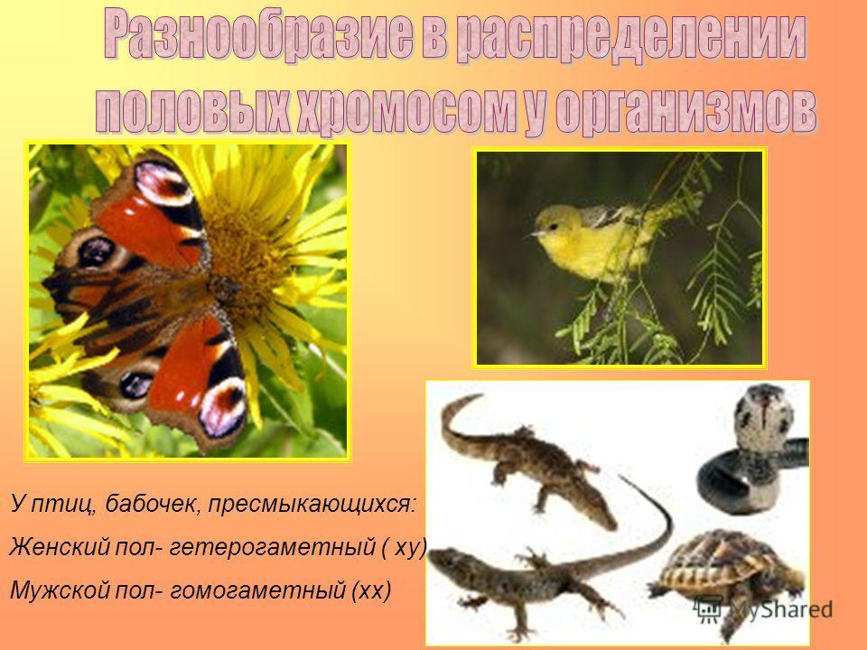 У птиц, бабочек, пресмыкающихся: Женский пол- гетерогаметный ( хy) Мужской пол- гомогаметный (хх)
