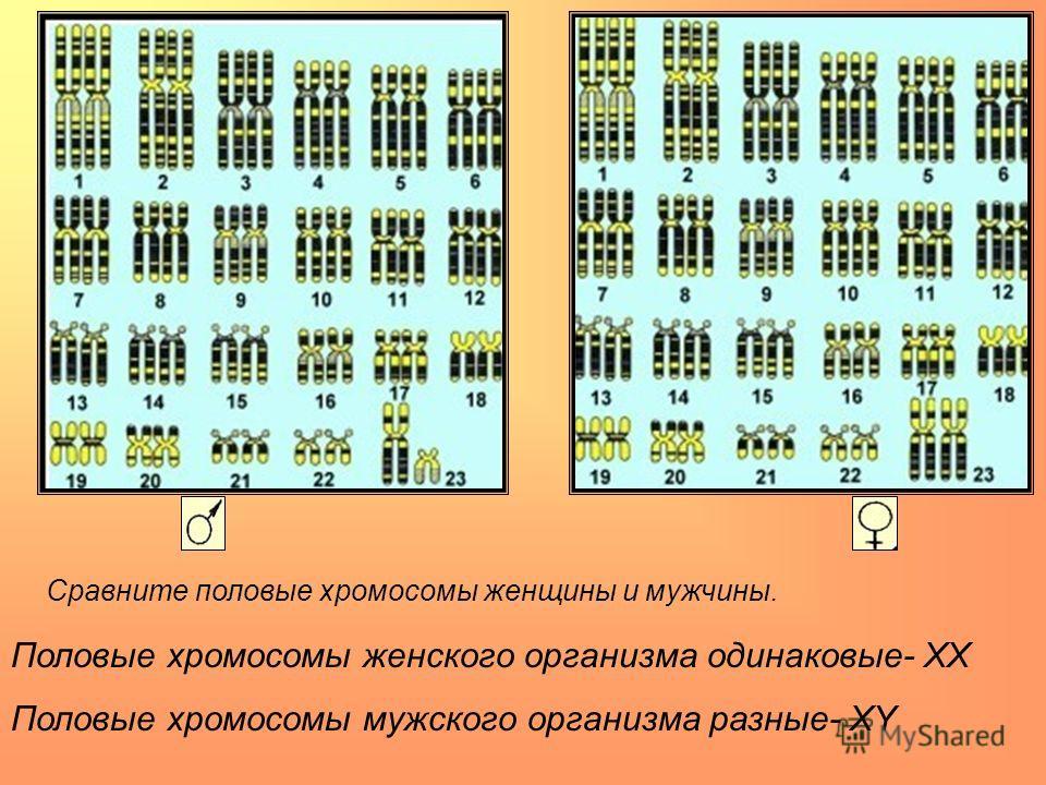 Сравните половые хромосомы женщины и мужчины. Половые хромосомы женского организма одинаковые- ХХ Половые хромосомы мужского организма разные- ХY