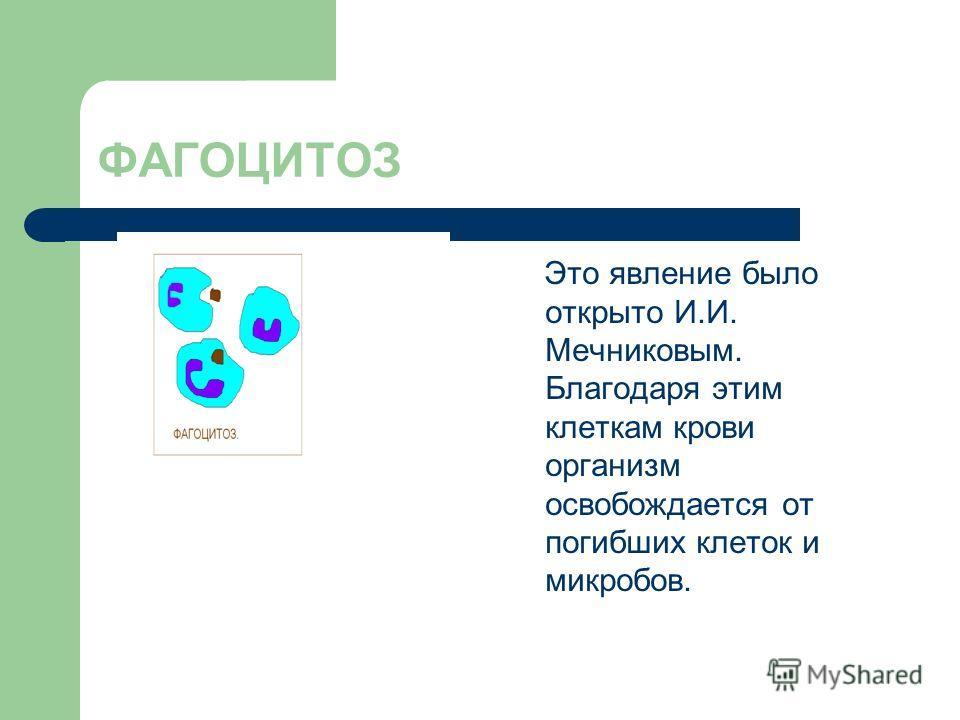 ФАГОЦИТОЗ Это явление было открыто И.И. Мечниковым. Благодаря этим клеткам крови организм освобождается от погибших клеток и микробов.