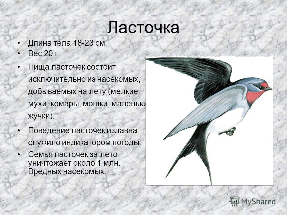 Трясогузки Желтая и белая трясогузка. Длина тела 16-18,5 см. Вес 17 г. Уничтожает вредных насекомых, мух.