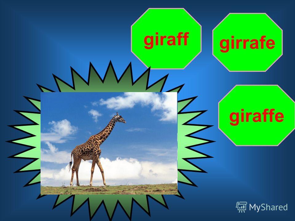 girrafe giraff giraffe