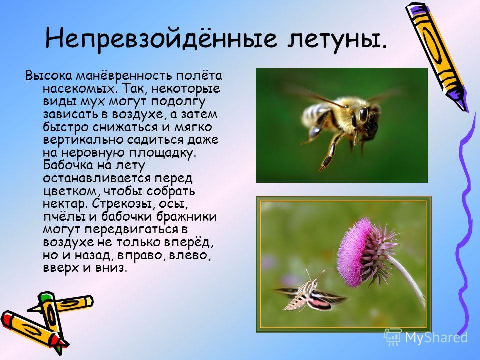 Непревзойдённые летуны. Высока манёвренность полёта насекомых. Так, некоторые виды мух могут подолгу зависать в воздухе, а затем быстро снижаться и мягко вертикально садиться даже на неровную площадку. Бабочка на лету останавливается перед цветком, ч
