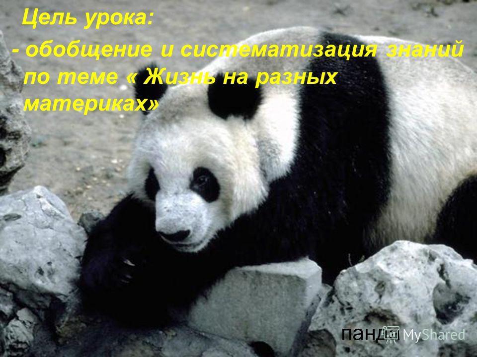 Цель урока: - обобщение и систематизация знаний по теме « Жизнь на разных материках» панда
