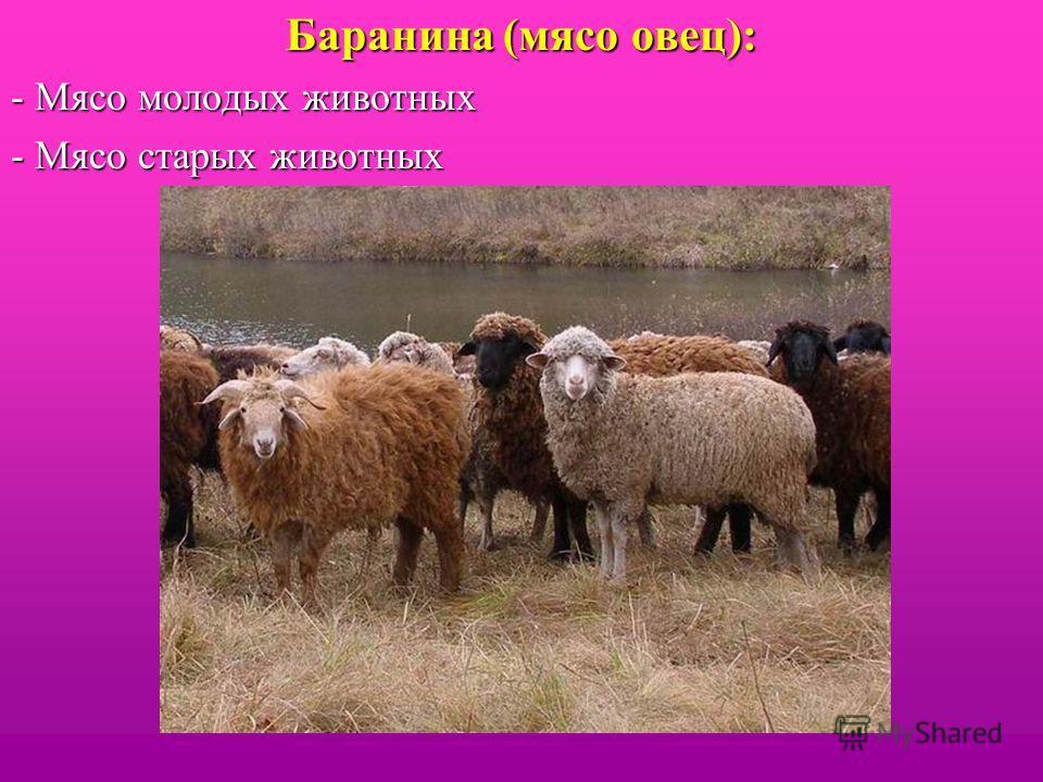 Баранина (мясо овец): - Мясо молодых животных - Мясо старых животных