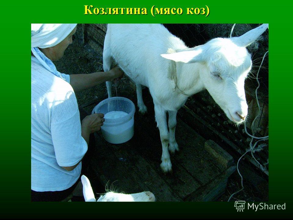 Козлятина (мясо коз)