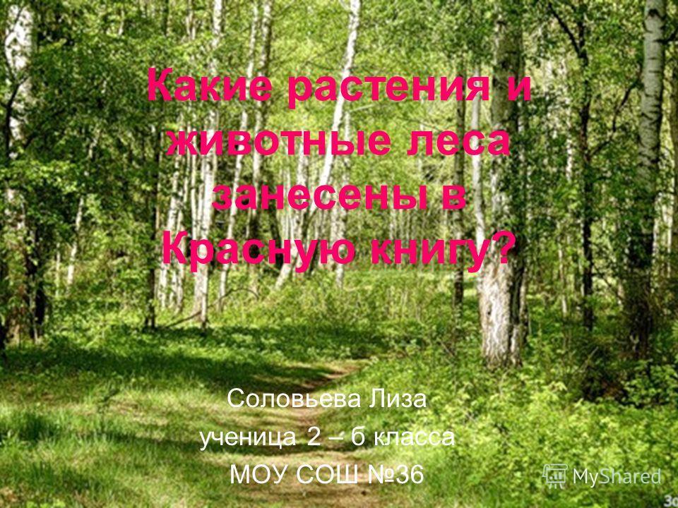 Какие растения и животные леса занесены в Красную книгу? Соловьева Лиза ученица 2 – б класса МОУ СОШ 36
