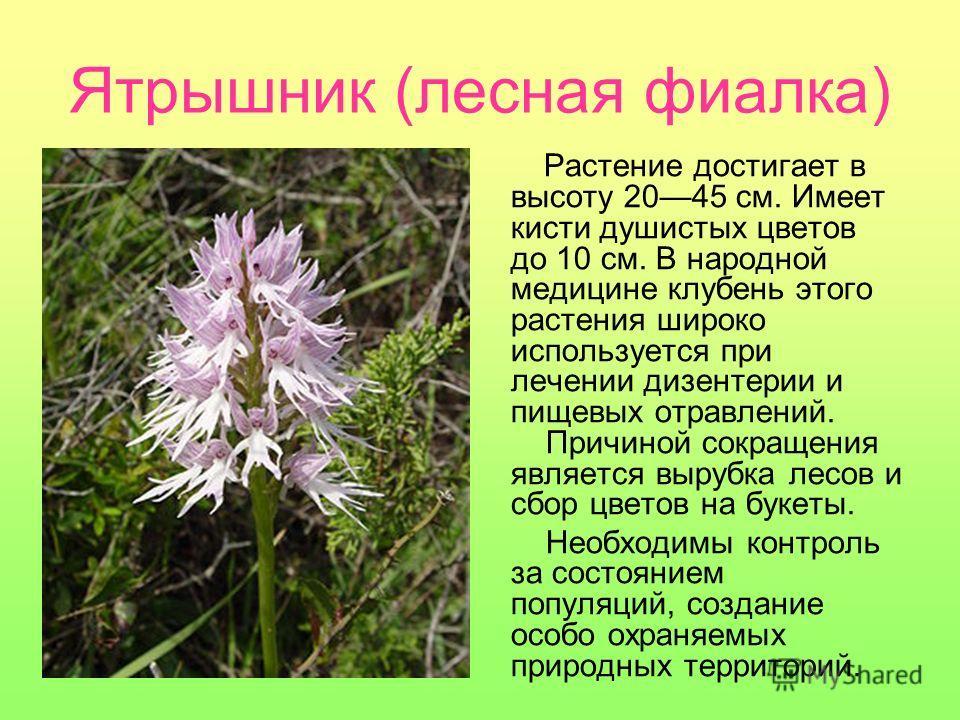 Растения занесенные в красную книгу украины реферат 5421
