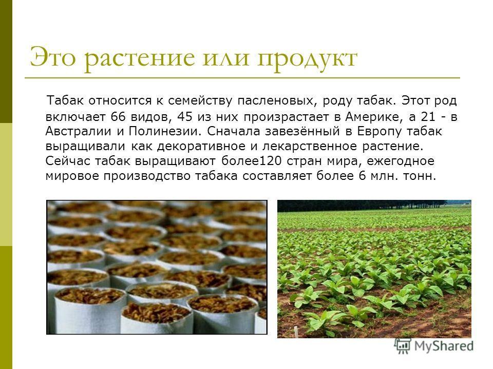 Это растение или продукт Табак относится к семейству пасленовых, роду табак. Этот род включает 66 видов, 45 из них произрастает в Америке, а 21 - в Австралии и Полинезии. Сначала завезённый в Европу табак выращивали как декоративное и лекарственное р